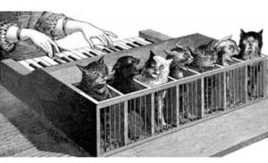 cat-organ